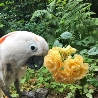 SUPPORT OUR PARROTS